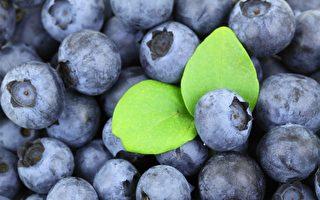 浆果富含抗氧化剂超氧化物歧化酶(SOD),对减少氧化应激、促进细胞再生很有帮助,这是保持肝脏健康、预防关节疼痛的关键。(Public Domain/Pixabay)