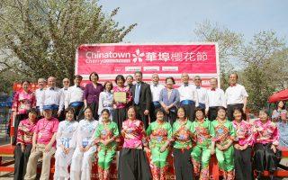一年一度华埠樱花节于29日在孔子大厦近包厘街的广场举行,吸引众多人潮。 (中华总商会提供)