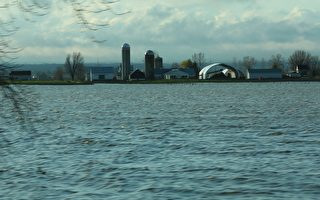 专家称加首都地区洪灾给人类带来灾难,但是对河流及周边陆地的生物来说却是生态财富。圖為被洪水淹沒的加蒂諾農場。(任僑生/大紀元)