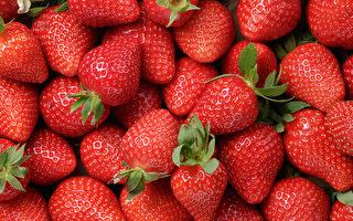 草莓低熱量高纖維,富含抗氧化劑和多種營養素,是高效減肥和護心食品。(GooDween123/Shutterstock)