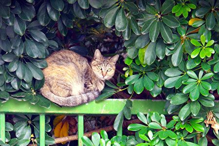 野貓 (攝影:王嘉益  / 大紀元)  (攝影:  Jiayi  Wang   / 大紀元)