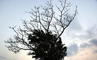 决策树与人生的抉择