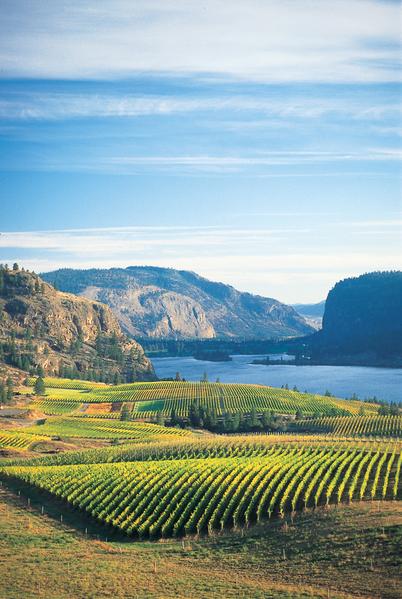 卑诗省内大大小小的酒庄已超过二百间,酿造的酒目名单以千计,在加拿大本土及国际酒坛上已经有极高的地位。(阮公子提供)