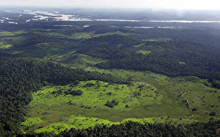研究:神秘亞馬遜雨林是人造 曾有5千萬土著人