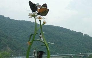 高雄茂林國家風景區景色優美,「紫蝶幽谷」為世界級的自然資產,是全世界僅有的兩處越冬型蝴蝶谷之一。(張貴卿/大紀元)