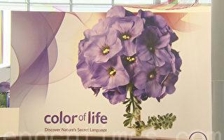 在「color of life」的展覽裡,讓人看到了自然界裡五顏六色的生物如何通過顏色來保護自己。(大紀元)