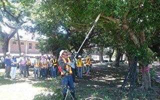 """""""106年高雄市各风景区灾害抢修工作讲习""""特别实际演练路树扶正等,让学员更了解应变方式,提升灾情复原效率。(高市观光局提供)"""