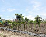 宜市第四座市民農園開工整地。(宜蘭市公所提供)
