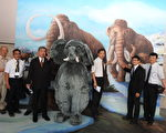 """科博馆《象群特展》带领民众了解""""真象"""",展出超过200件馆藏罕见的大象化石与骨骼标本。(赖瑞/大纪元)"""