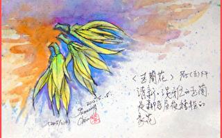 彩绘生活(329)玉兰花