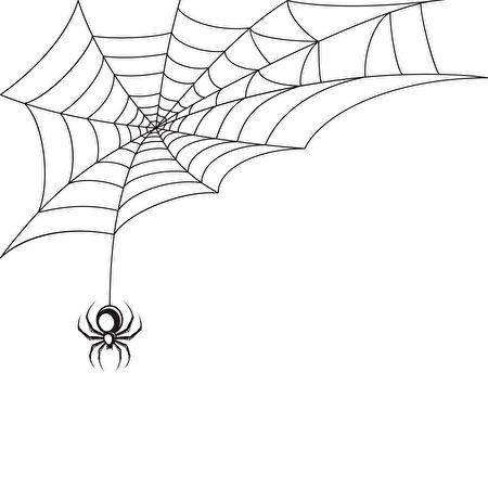 蜘蛛(Fotolia)