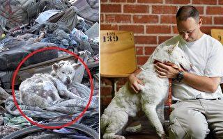 瀕死的流浪狗幸運獲救傳遞愛心助同伴康復