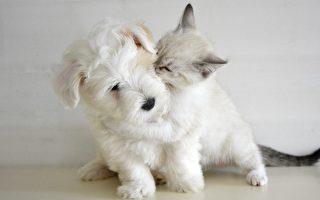 狗真的比猫聪明吗?日本科学家给出了答案!