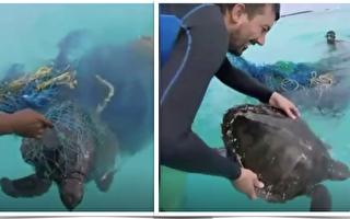 超有爱!海龟被鱼线缠住 遇善心人士紧急救援