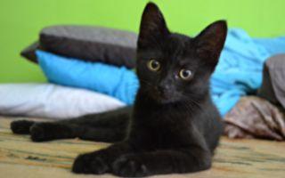 波兰护士猫陪伴伤病动物 暖心呼噜好疗愈