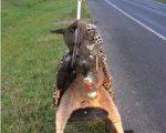 动物保护组织PETA提供5,000澳元的奖励,呼吁民众帮助将凶手绳之以法。(DELWP)