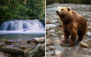 三幼熊掉落瀑布 熊妈如何解救?