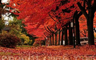 诗歌:加拿大秋色