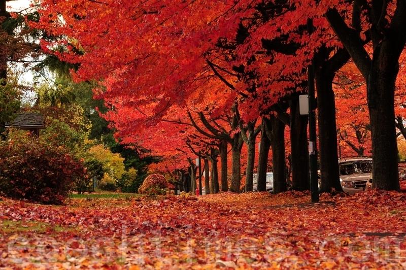 規劃賞楓行程 加拿大處處是美景