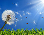 exclusive - allergy concept in spring(fotolia)