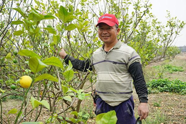 程永進種了三百多顆的檸檬樹。(廖素貞/大紀元)