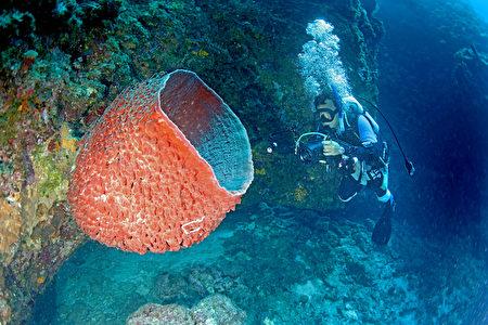 組圖:南沙太平島海底多樣生態首度曝光