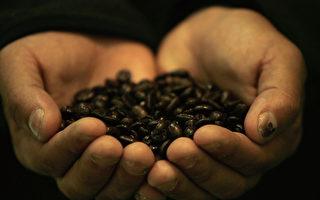 本年度前9月 宏都拉斯咖啡出口成長55%