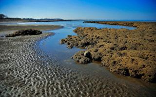 环团:桃园藻礁世界独有 无法异地复育