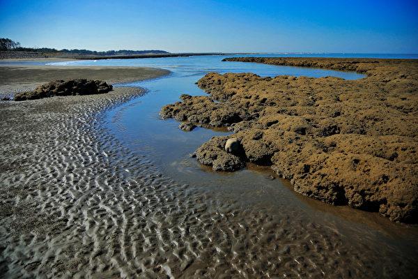 桃園藻礁原本有27公里長,世界獨有。(桃園在地聯盟/提供)
