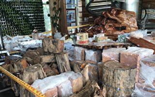 檢警掃蕩山老鼠 查扣5千萬元珍貴林木
