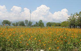 花園綠景妝點蘭陽平原迎接全運會