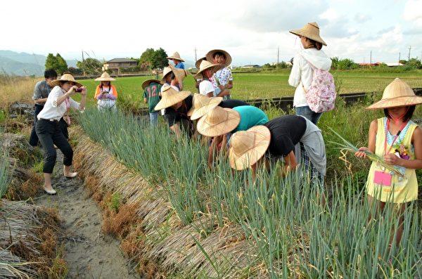 日本岐南町参访团体验采葱。(三星乡公所提供)