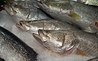由于水温下降,盲曹鱼的主要食物来源被杀死。(PETER PARKS/Getty Images)