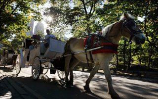 NYCLASS組織表示,不再呼籲市長禁止紐約市獨特的馬車觀光業。 (Mario Tama/Getty Images)