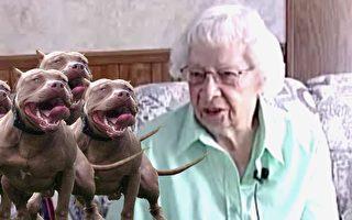 97岁老妇遭4恶犬袭击 危急关头 神秘英雄现身