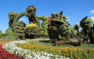 立体园艺MosaïCanada从6月30日~10月15日在加蒂诺Jacques-Cartier公园展示。6月30日开展以来已有超过12万人前往游览。(任侨生/大纪元)