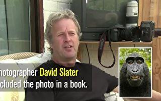 自拍猴子争版权?摄影师告破产 想遛狗维生