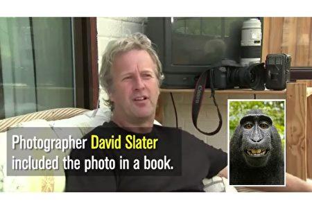 以保护黒猕猴为初衷的英国野生动物摄影师大卫‧史莱特(David Slater),却因为猴子自拍像深陷官司,近日宣告破产。(视频截图,维基百科/大纪元制图)