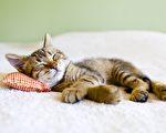 这个问题是no brainer,猫星人都不用伤脑筋就能解决。(Depositphotos)
