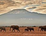 科学家警告说,地球将有四分之三的物种可能在未来几个世纪消失。图为肯亚安博塞利国家公园内的象群。(CARL DE SOUZA/AFP/Getty Images)