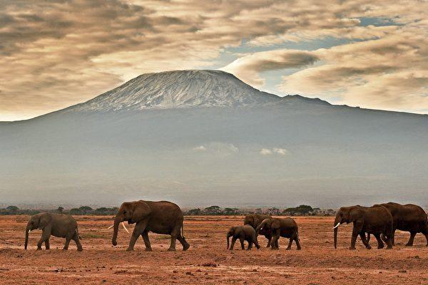 研究:地球第六次物種大滅絕正在上演