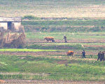 图为朝鲜农民在辛苦的劳作。(KIM JAE-HWAN/AFP/Getty Images)