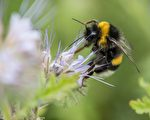 蜂蜜不僅能自己吃,還是送人的最甜蜜的禮物。    (SILAS STEIN/AFP/Getty Images)