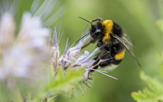 蜂蜜不仅能自己吃,还是送人的最甜蜜的礼物。    (SILAS STEIN/AFP/Getty Images)