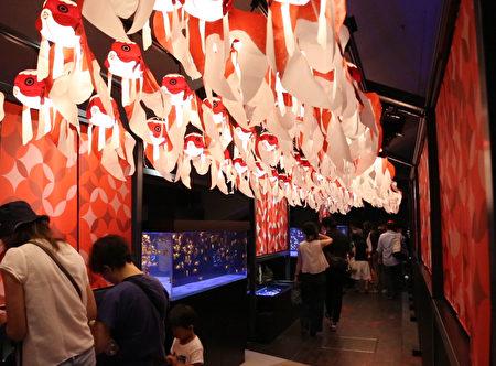 位於東京晴空塔旁的墨田水族館裡7月10日至8月31日舉辦「夏日江戶金魚展 」,這是日本最大規模的金魚展,具有濃濃的江戶風情。(葉妙音/大紀元)