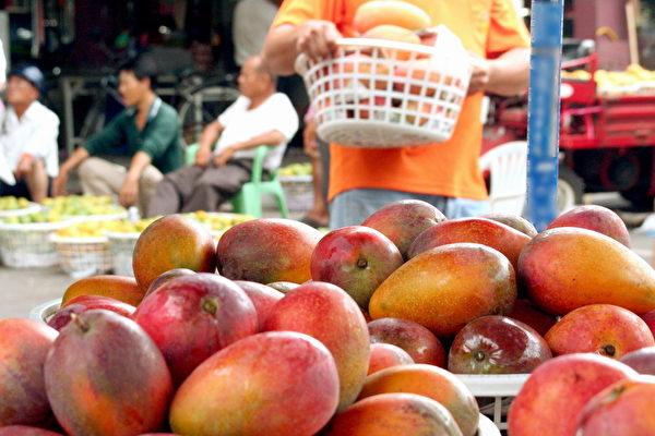 今年台南芒果品質佳、香甜美味,價格不貴,是大快朵頤的好時機。(賴友容/大紀元)