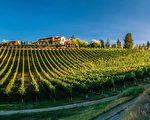 图:BC 新秀酒园 Mirabel Vineyards。(Mirabel Vineyards提供)