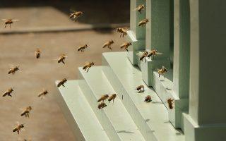 一名布碌崙女子的家中惊现三万五千只蜜蜂与巨型蜂窝。 (Peter Macdiarmid/Getty Images)