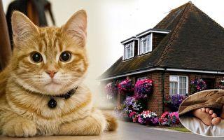 房屋半夜发出异响,猫咪发现危险,危险关头叫醒主人,逃过劫难。(Pixabay、维基百科/大纪元合成)