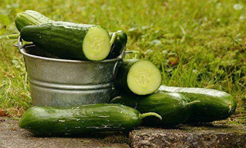 小黃瓜。(congerdesign/CC/Pixabay)